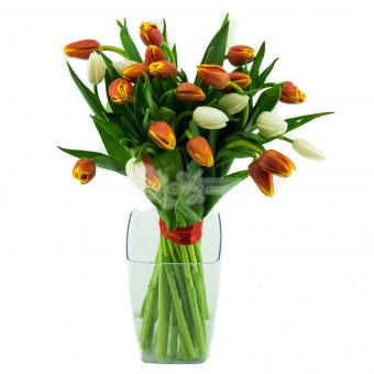 Букет из 27 Тюльпанов
