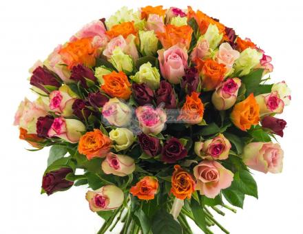 Разноцветная роза Кения поштучно